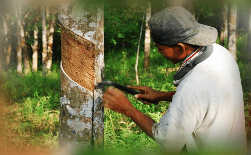 Индонезия сократит производство натурального каучука на 15 процентов