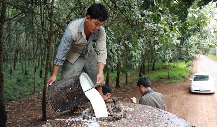 Камбоджа наращивает объемы экспорта натурального каучука